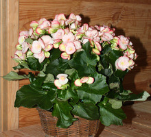 Evelyne Fleurs - NANGIS - Bouquets & Plantes