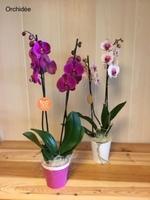 Evelyne Fleurs - NANGIS - Spécial Fête des mères - Orchidées